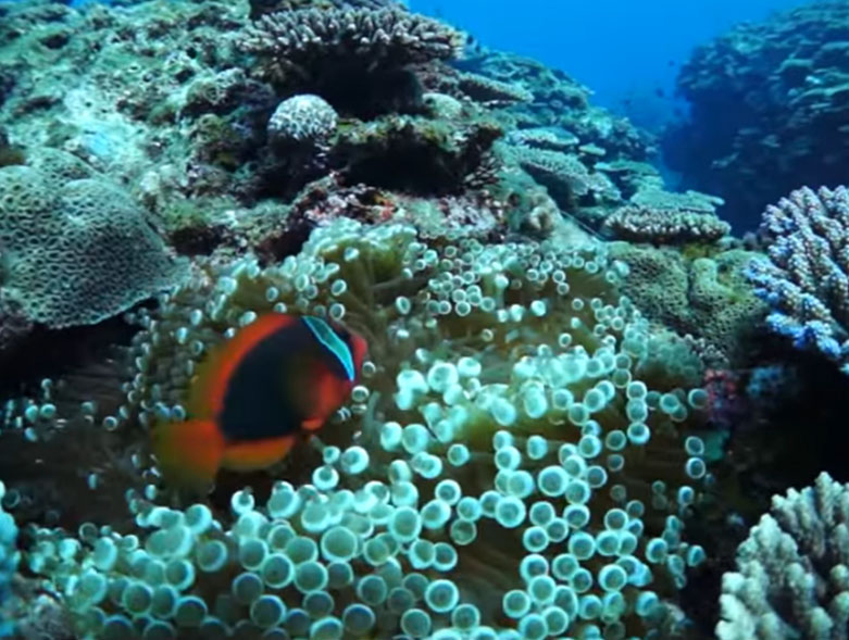 Scuba Diving in Yoron, Amami Islands, Japan